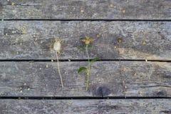 Flores secas en los viejos tableros de madera Foto de archivo