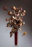 Flores secas en un florero Foto de archivo libre de regalías