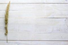 Flores secas en un fondo de madera blanco, papel pintado Fotografía de archivo