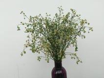 Flores secas en una botella foto de archivo