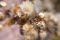 Flores secas pequenas do outono fotos de stock