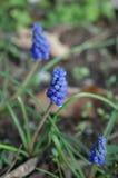 Flores selvagens Fotos de Stock Royalty Free