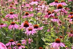 Flores selvagens Fotos de Stock