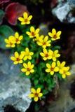 Flores selvagens imagem de stock
