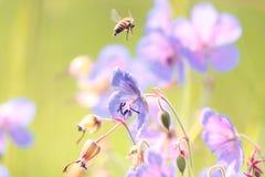 Flores selvagens Imagem de Stock Royalty Free