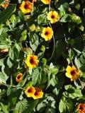 Flores selvagens Fotografia de Stock Royalty Free