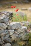 Flores selvagens Foto de Stock