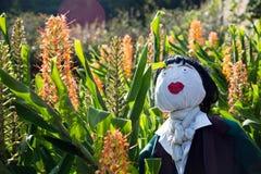 Flores selvagens alaranjadas com boneca de pano fotos de stock