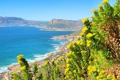 Flores selvagens amarelas, montanha, opinião do mar fotografia de stock