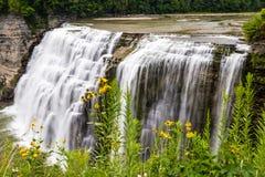 Flores selvagens ao longo do desfiladeiro perto das quedas médias, paridade do estado de Letchworth Fotografia de Stock