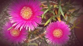 Flores selvagens bonitas Imagens de Stock Royalty Free