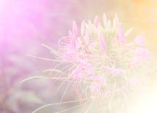 Flores selvagens bonitas da cor vívida no estilo macio Imagens de Stock