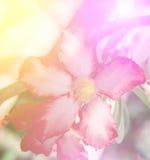 Flores selvagens bonitas da cor vívida no estilo macio Fotos de Stock Royalty Free