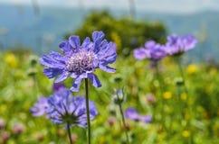 Flores selvagens bonitas em uma paisagem Foto de Stock