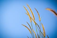 Flores selvagens bonitas na grama do forestMission ao longo do pântano no por do sol Fotos de Stock Royalty Free