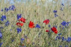 Flores selvagens bonitas no campo Imagens de Stock