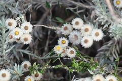 Flores selvagens bonitas que olham para baixo Foto de Stock