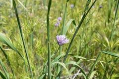 Flores selvagens bonitas - uma parte dos fen?menos do superbloom na cordilheira de Walker Canyon perto do lago Elsinore fotografia de stock