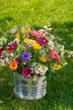 Flores selvagens coloridas Imagem de Stock Royalty Free