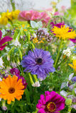 Flores selvagens coloridas Fotos de Stock Royalty Free
