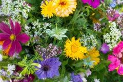 Flores selvagens coloridas Fotografia de Stock