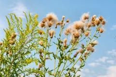Flores selvagens contra céus imagem de stock