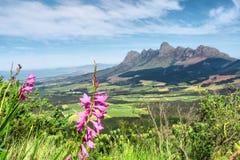 Flores selvagens cor-de-rosa nas montanhas fotos de stock