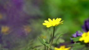 Flores selvagens da mola filme