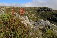 Flores selvagens da montanha da tabela Imagem de Stock Royalty Free