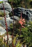 Flores selvagens da montanha da tabela Foto de Stock