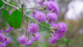 Flores selvagens de Ámérica do Sul Fotografia de Stock