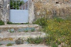 Flores selvagens de brotamento e paredes velhas fotografia de stock