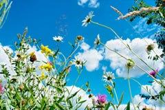 Flores selvagens de encontro ao céu azul foto de stock