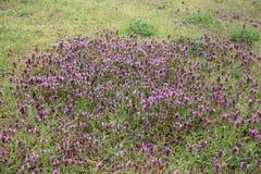 Flores selvagens de florescência com plantas novas fotos de stock royalty free
