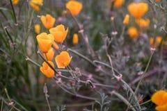 Flores selvagens de florescência no prado no tempo de mola imagem de stock royalty free