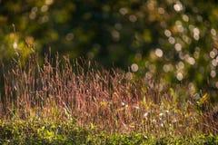 Flores selvagens do rosa do prado no campo do outono Imagens de Stock Royalty Free