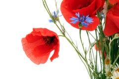 Flores selvagens do verão Imagem de Stock Royalty Free