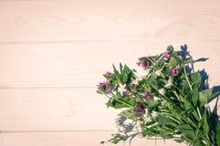 Flores selvagens e fundo de madeira branco Imagem de Stock Royalty Free