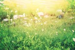 Flores selvagens e grama no estilo do vintage imagem de stock royalty free