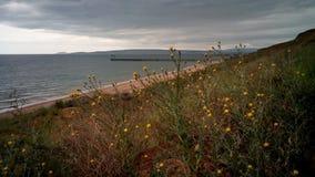 Flores selvagens e grama no litoral, Crimeia fotografia de stock royalty free