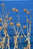 Flores selvagens e mar fotografia de stock