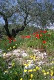 Flores selvagens e oliveira Imagens de Stock Royalty Free