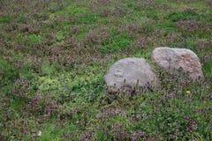 Flores selvagens e pedra com plantas novas imagens de stock royalty free