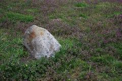 Flores selvagens e pedra de floresc?ncia com plantas novas fotografia de stock