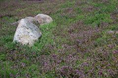 Flores selvagens e pedra de florescência imagens de stock