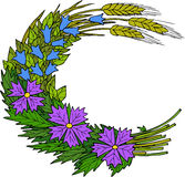 Flores selvagens e trigo ilustração do vetor
