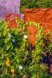 Flores selvagens e vegetação em um fundo do metal oxidado Imagem de Stock