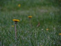 Flores selvagens em ireland no verão Fotografia de Stock Royalty Free