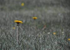Flores selvagens em ireland no verão em Longford Fotos de Stock