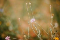 Flores selvagens em um fundo foto de stock